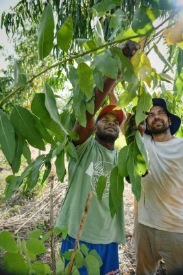 Ian volunteer Agroforestry Trainer with his colleague Nemani from the Pacific Islands Rainforest Foundation in Fiji. Photo credit D.James